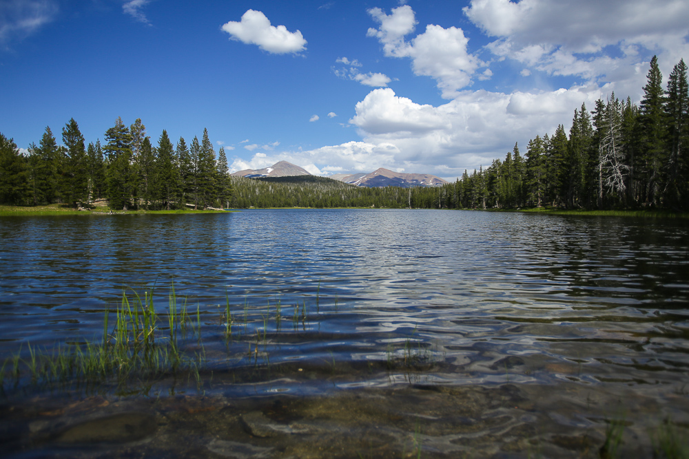 Calm blue lake with trees surrounding Yosemite National Park