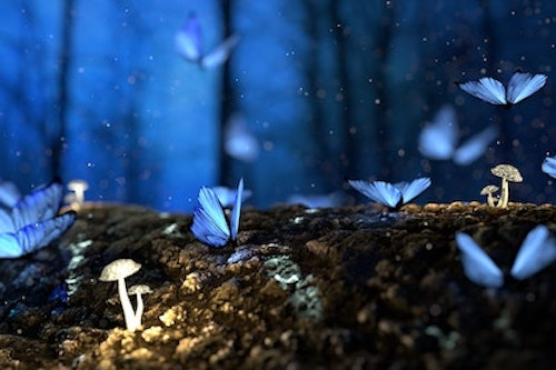 magical blue butterflies on a log with mushrooms during the early night in a forest