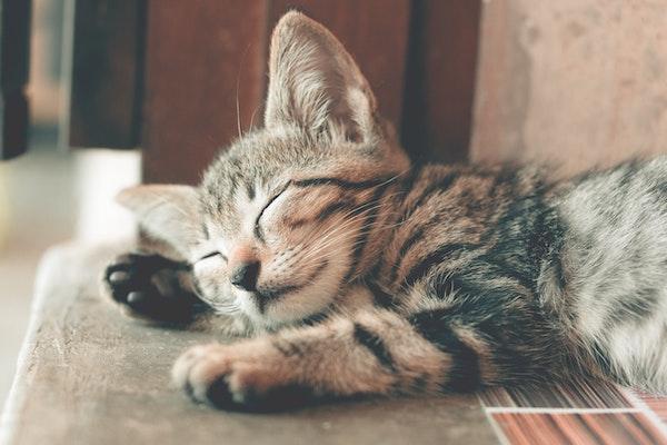 a striped kitten asleep in the sun