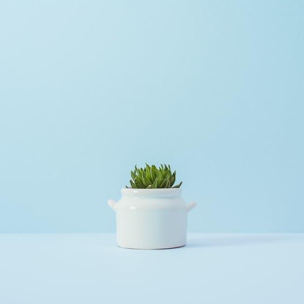 A small succulent desk plant on a minimal pale blue desk with a pale blue background