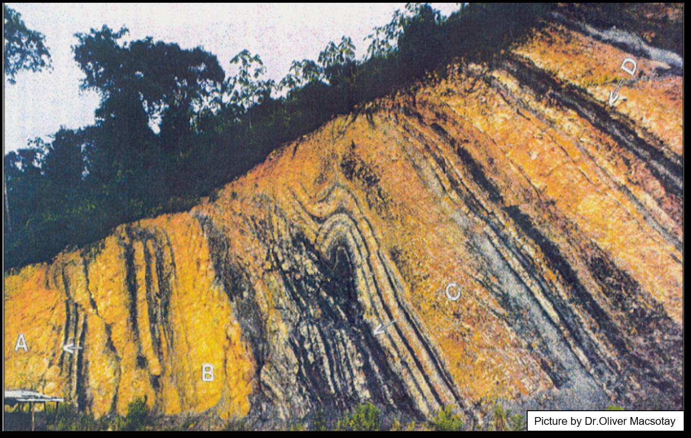 Early Cretaceous Conomita outcrop: structural analysis of syn-sedimentary gravity-driven deformations (NE Venezuela)
