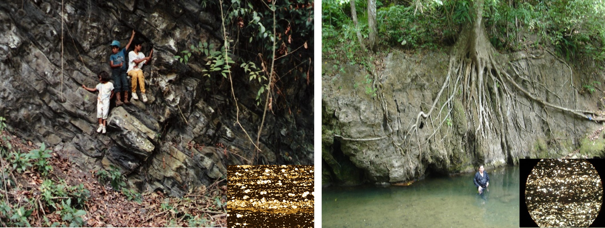 Estratigrafía, Bioestratigrafía y Rocas Generadoras