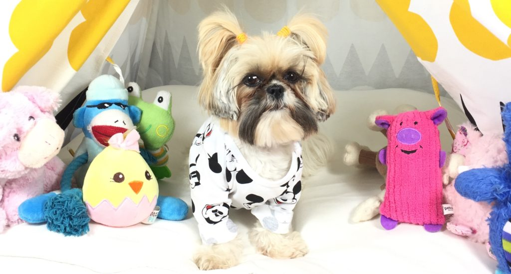 leona-the-lion-instagram-shihtzu
