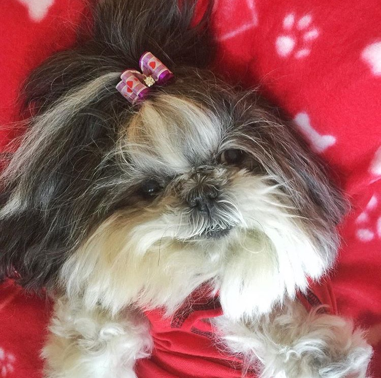 shihtzu-abigail-Unique-Female-Dog-Names