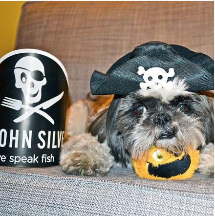 shihtzu-instagram-mylo-Unique-Male-Dog-Names
