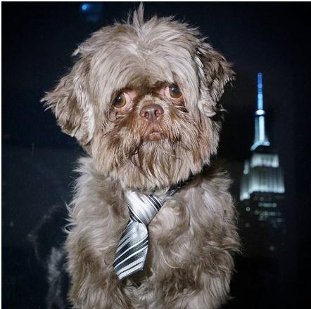 shihtzu-instagram-koki-Unique-Male-Dog-Names