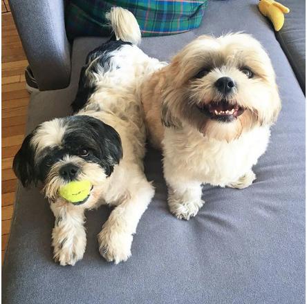 quinn-chester-shihtzu-instagram-Unique-Male-Dog-Names