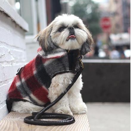 marshall instagram shihtzu-Unique-Male-Dog-Names