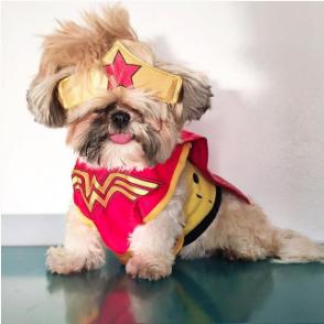 leona-the-lion-instagram-famous-dog