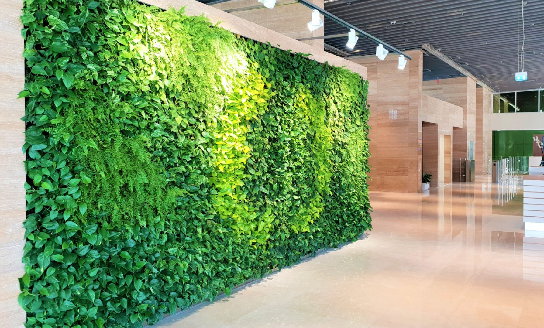 Green Wall Office Installation From Planters