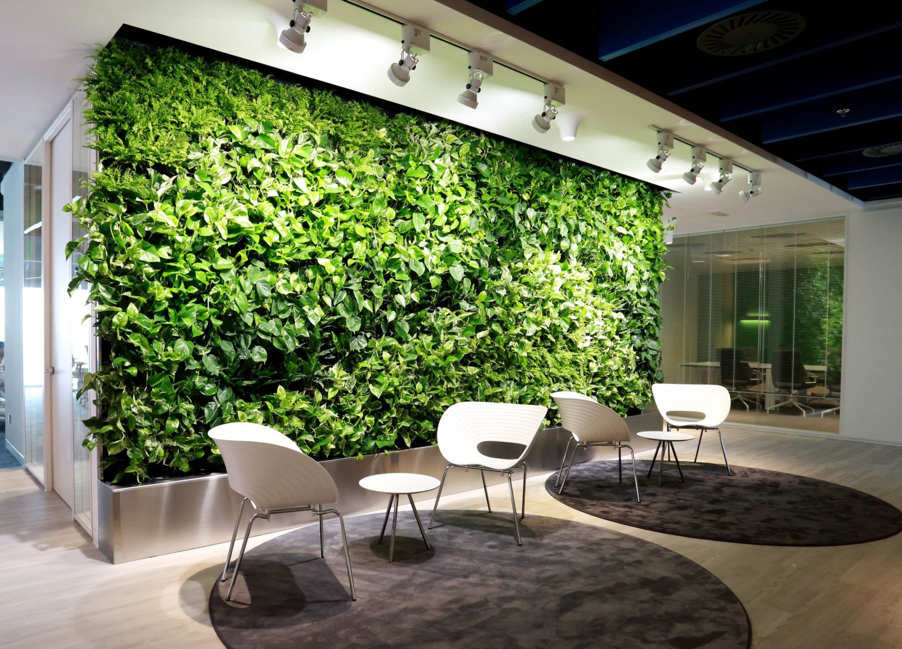 Green wall under spot lights