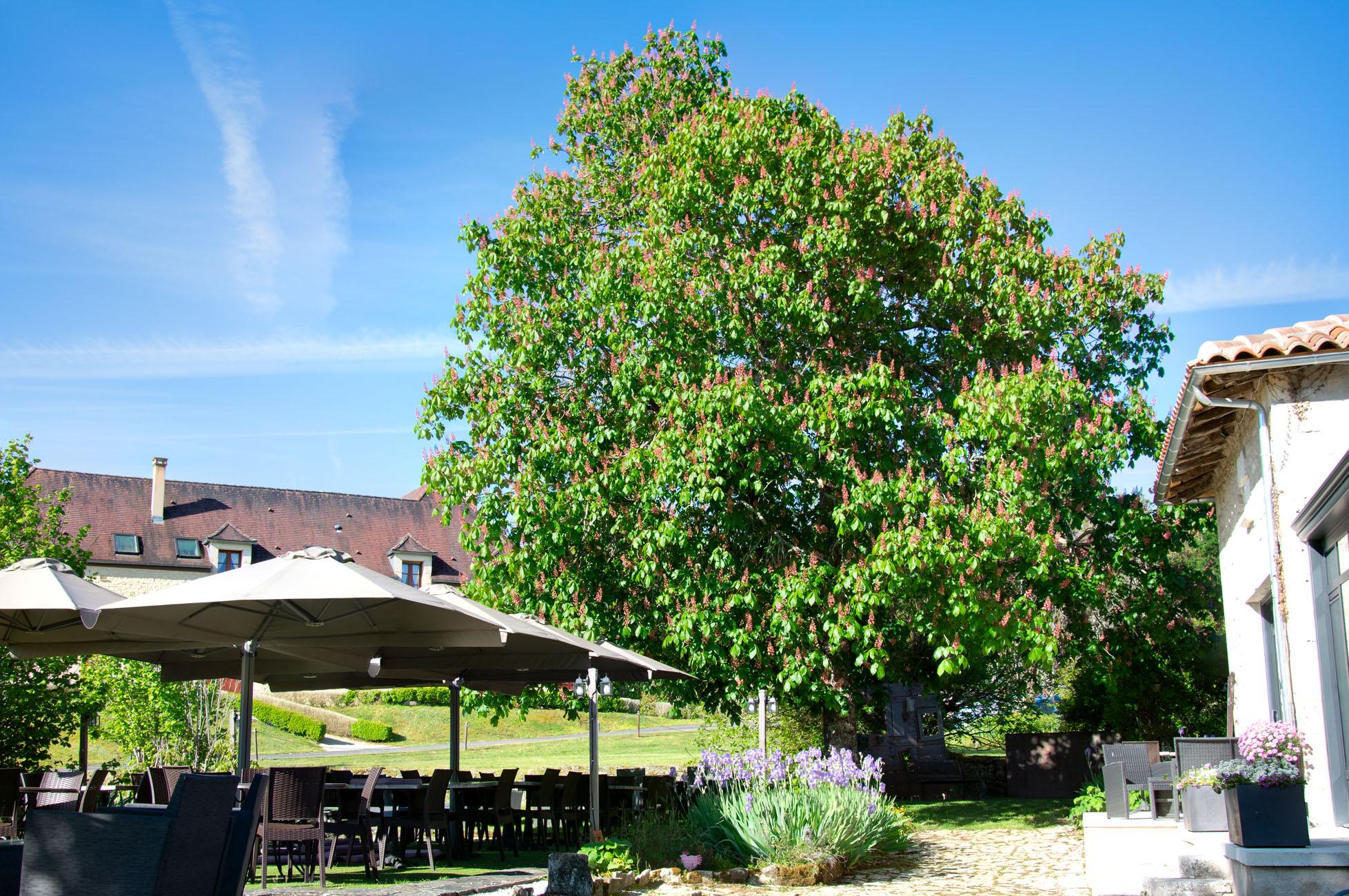 Arbre et terrasse - Tree and terrasse