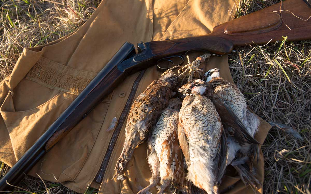 group of quail next to a shotgun and hunting vest