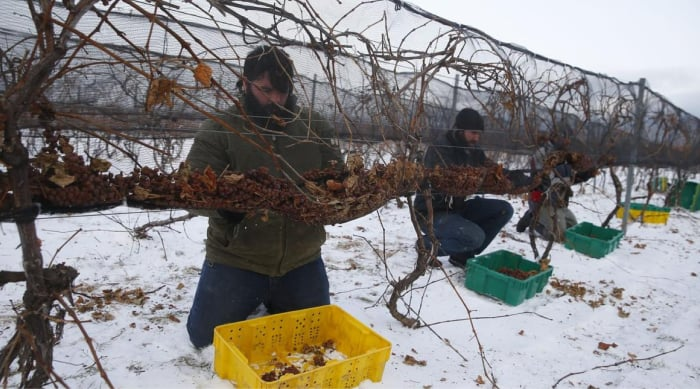How Is Ice Wine Made?