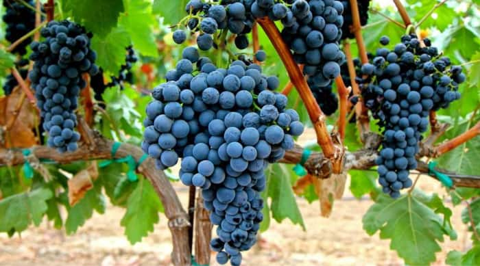 Tempranillo wine: Terroir
