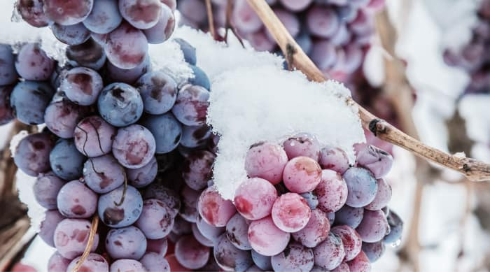 How is sweet red wine made?