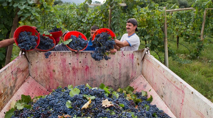 Different winemaking methods used in producing red wine and white wine
