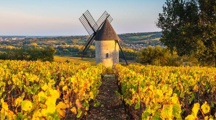 White Burgundy Wine: Côte d'Or vineyard