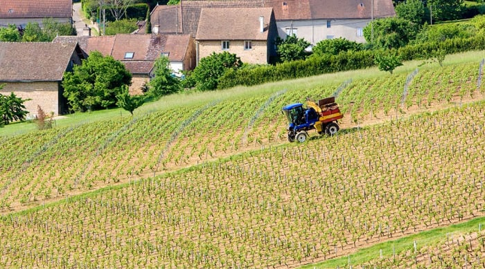 White Burgundy wine: Côte Chalonnaise