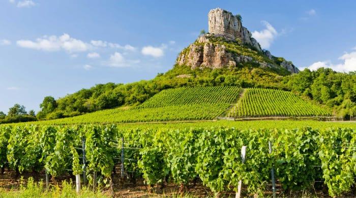 White Burgundy wine: Mâconnais