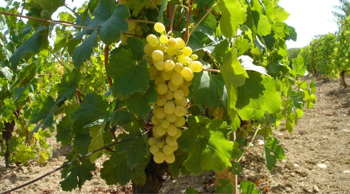 How are Sparkling Wines Made?