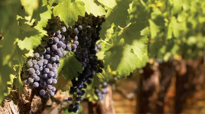 All You Need to Know About Barbaresco Wines