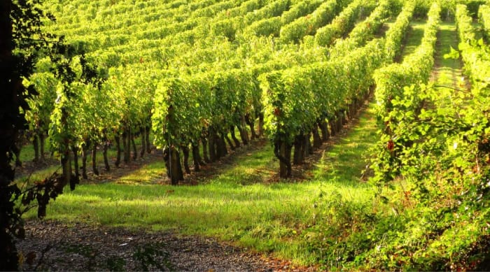 Viticulture and Winemaking practices in the Vouvray wine region