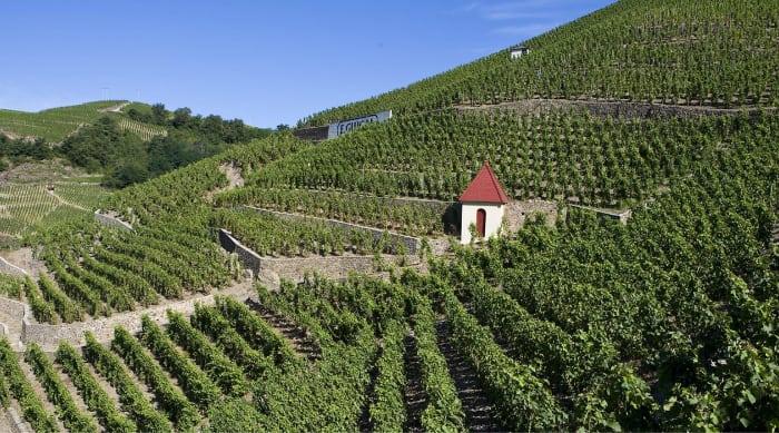 Cotes du Rhone wine: Côte Rôtie