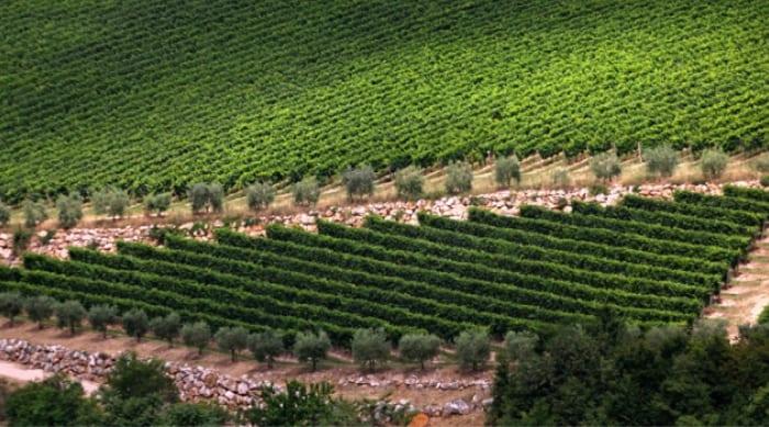Valpolicella Regions Where Amarone Is Produced