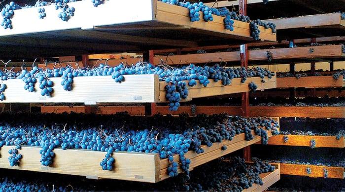 Unique Winemaking Methods Used to Create Amarone Della Valpolicella