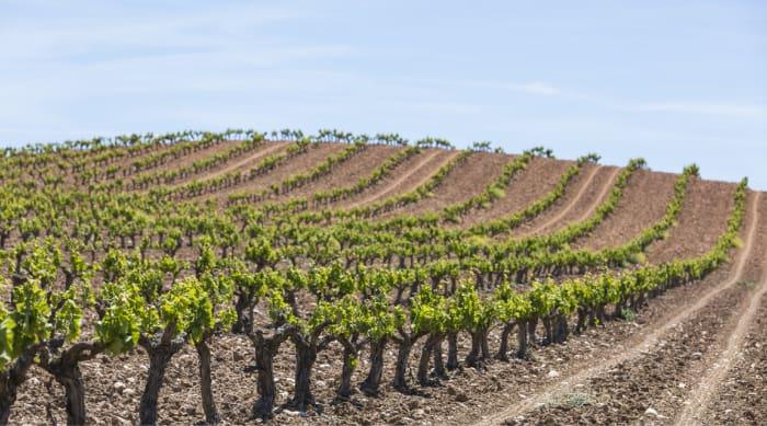 Vega Sicilia Vineyards