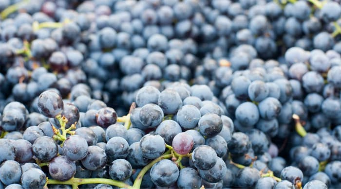 What is Lambrusco?