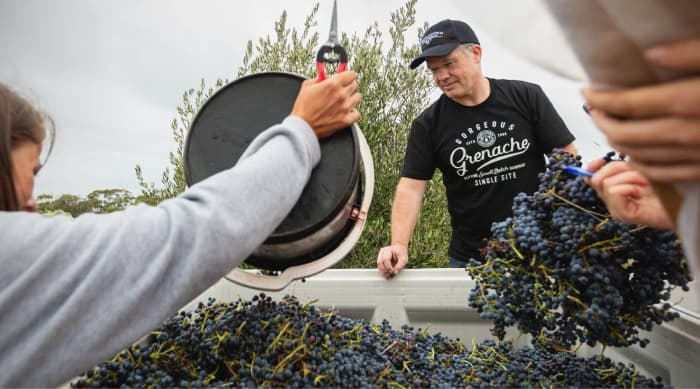 Winemaking with Grenache