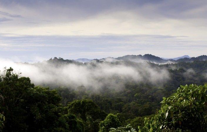 En fjerdedel av langstrakte Panama er dekket av regnskog.