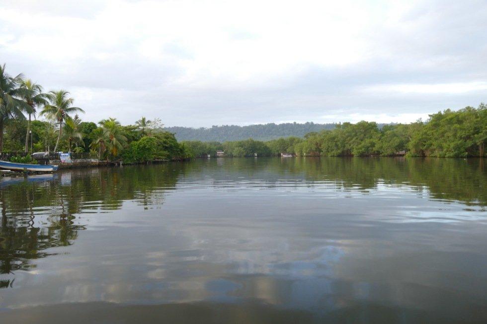 Taxibåter deg gjennom mangroveskog til Bocas del Toro fra Almirante.