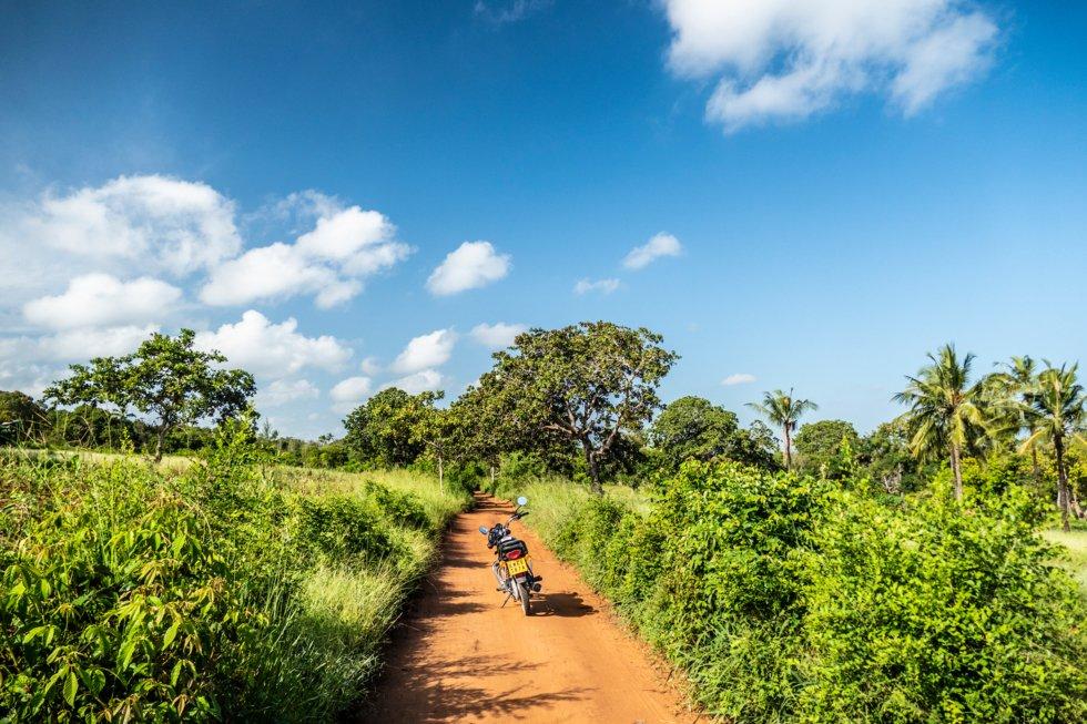Den røde jorden som dekker det afrikanske kontinent gir fin kontrast til de irrgrønne landskapet på landsbygda