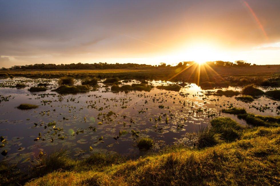 Våtmarksområder utgjør en stor del av nasjonalparken