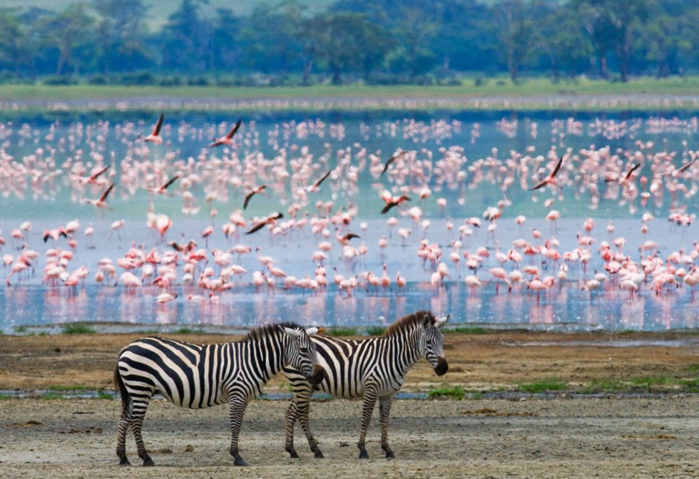 Serengeti, Tanzania.