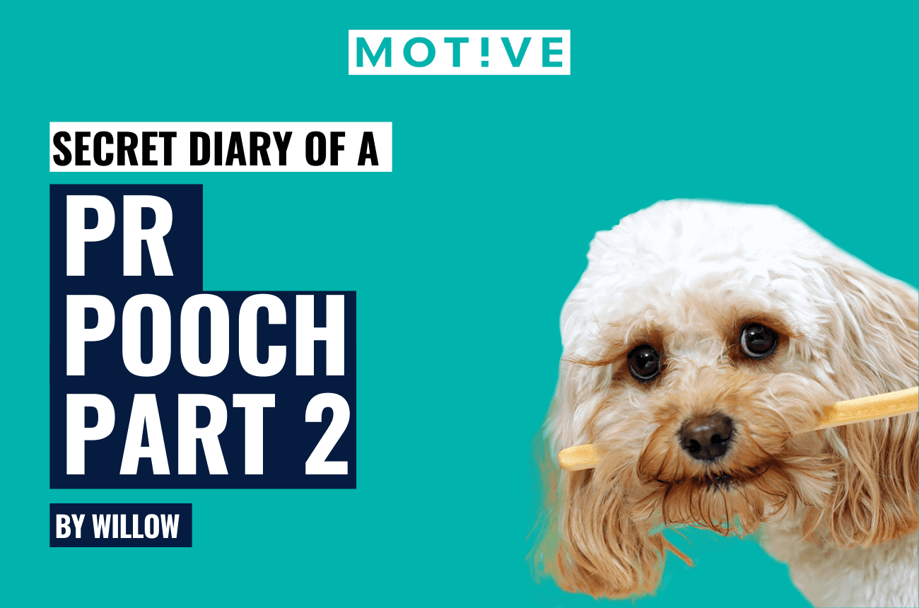 Diary of a PR Pooch Part 2
