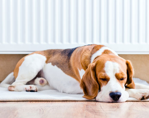 radiator panels are safe for pets and children