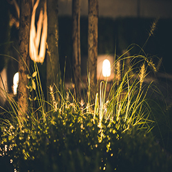 Security & Landscape Lights