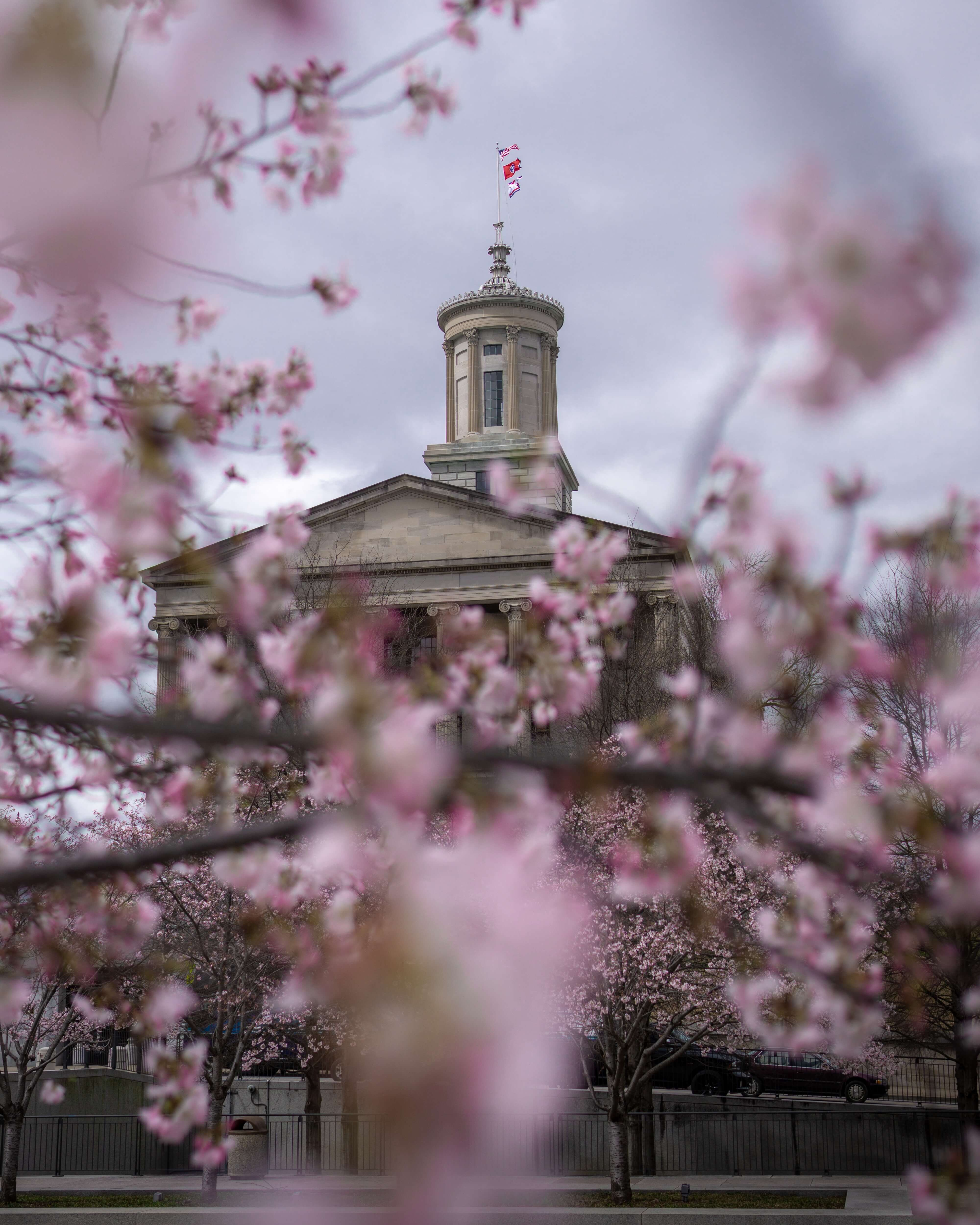 A medium shot of the Tennessee State Capitol building partially obscured by a cherry blossoms.