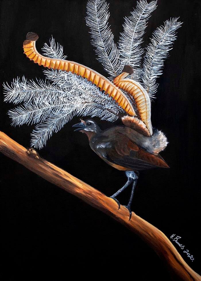 Hunter Barnes - Lyrebird PRESALE for Guest Artist