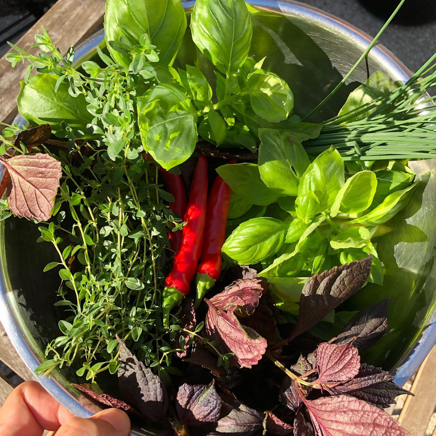 Late summer's bounty from the rooftop garden. 🌿 join the whole family (of herbs) for brunch, glistening under the morning rays. This weekend we celebrate the labor of all of the many hands it takes to bring food to the table... farmers, delivery people, prep cooks, dishwashers, and supportive friends and family. ❤️ #laborday #herbgarden #rooftopgarden #baltimorebrunch #knowyourfarmer #eatlocalbaltimore #madeinbaltimore