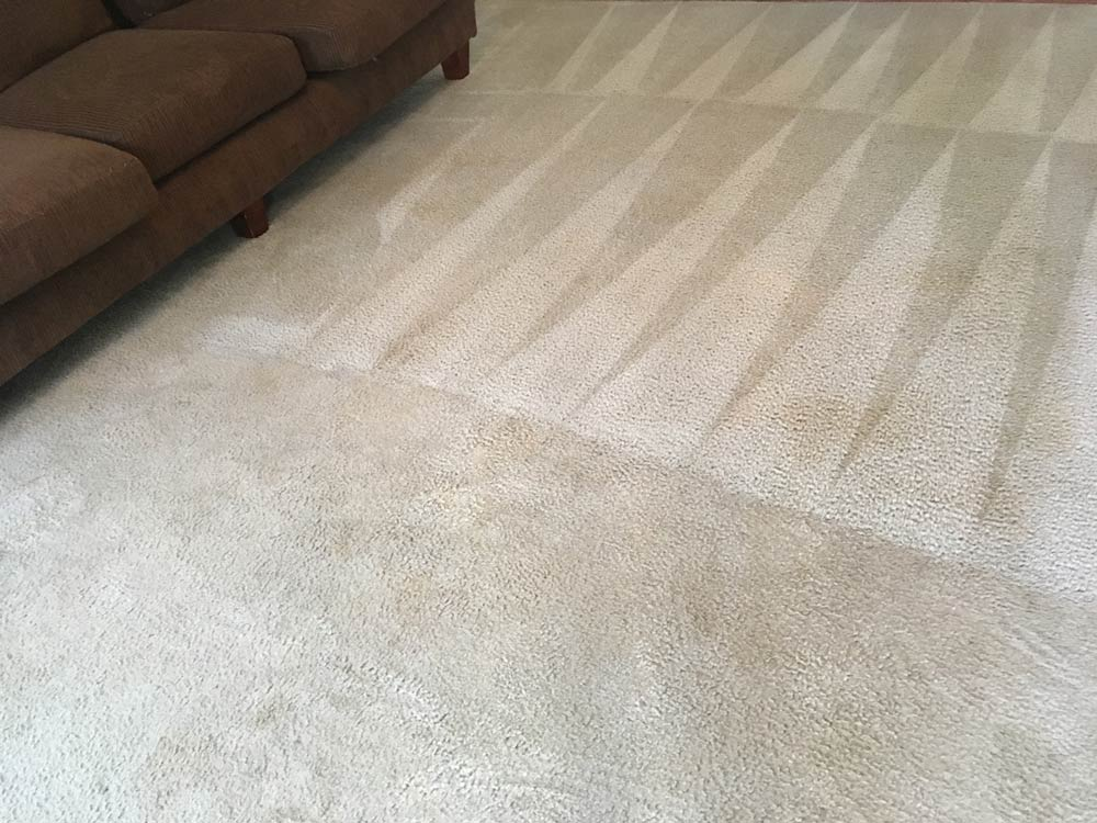 Evans Carpet Cleaning in progress