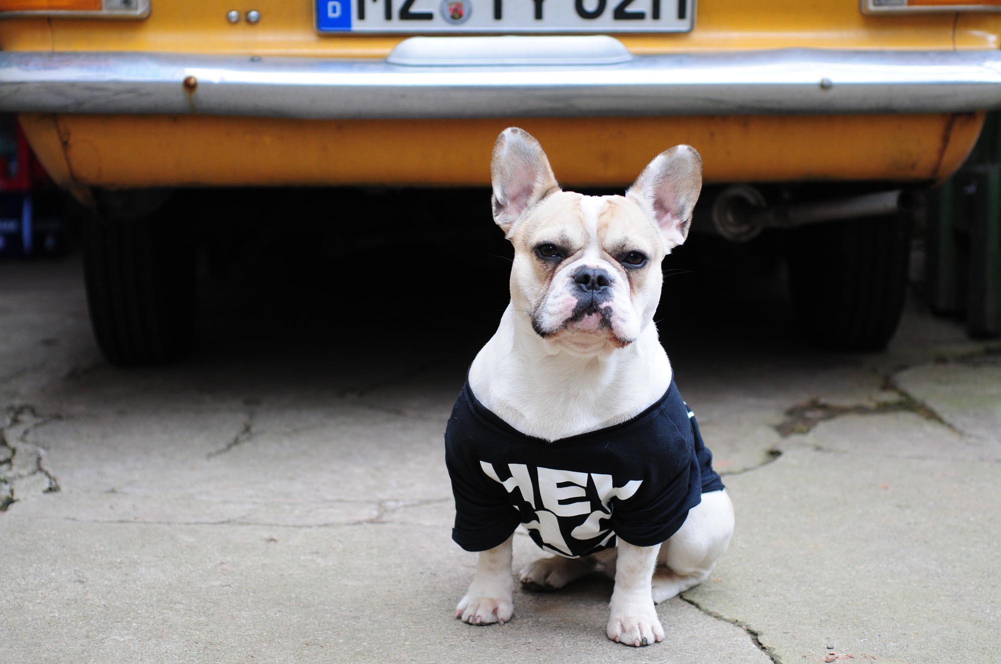pup-tshirt