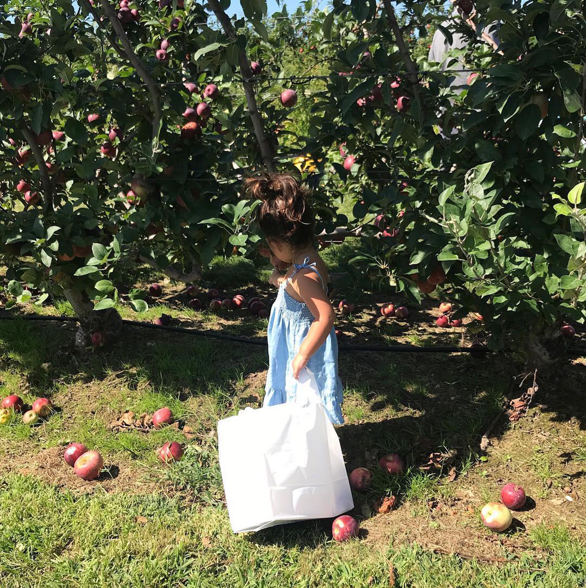 kid-apple-picking