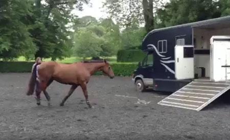 Loading horse into horse box
