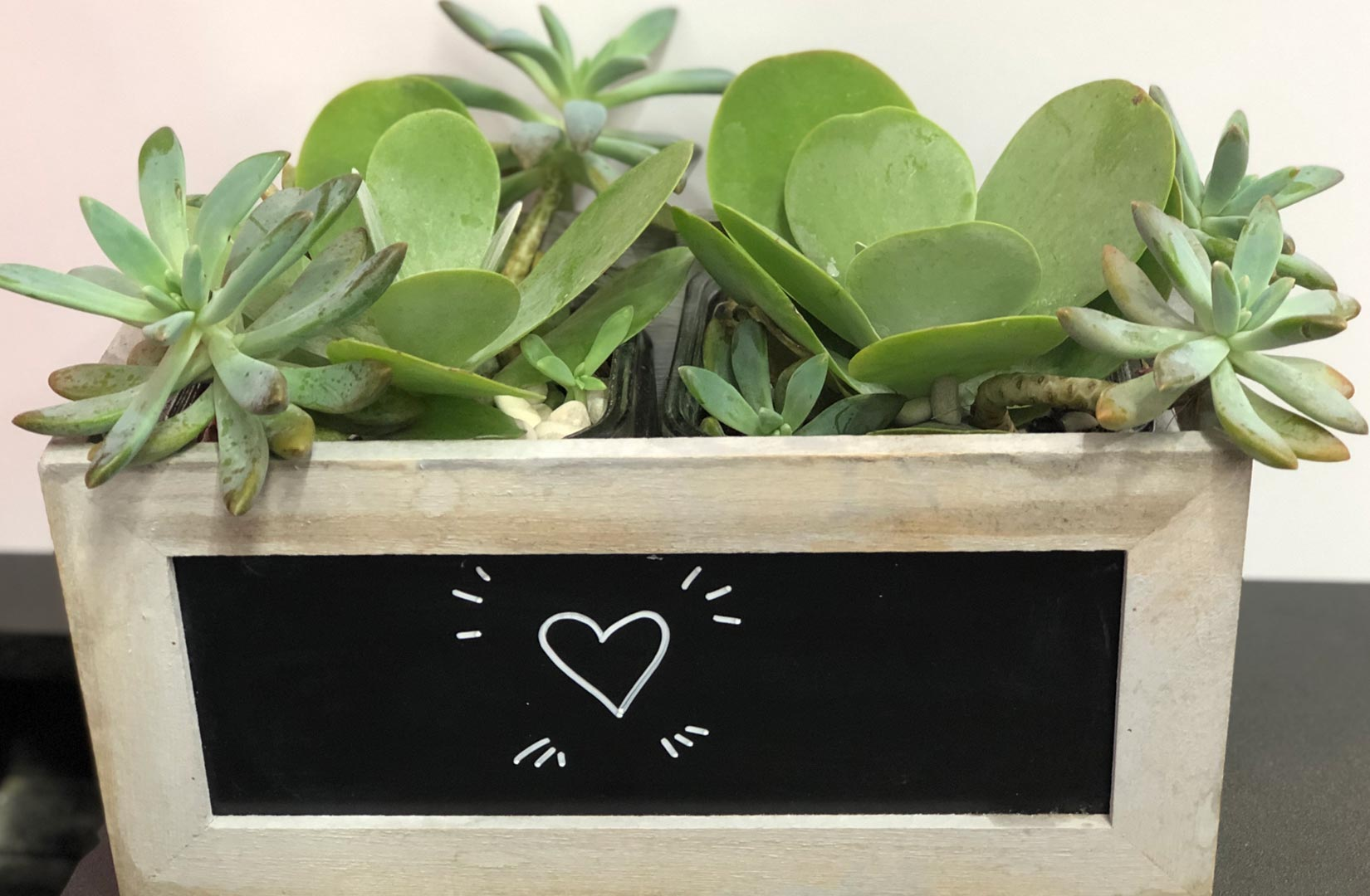 Noosa Village News - Planter Box
