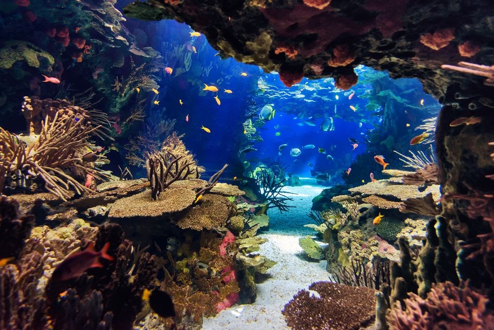 Aquarium at Pittsburgh Zoo & PPG Aquarium